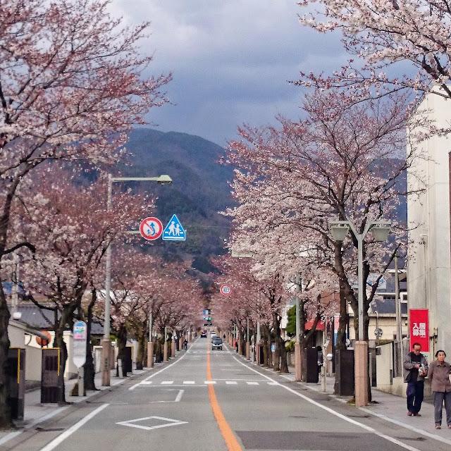 武田通り 桜並木