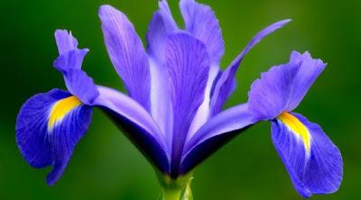 Jual Februari: Bunga Iris,  Harga Februari: Bunga Iris,  Toko Februari: Bunga Iris,  Diskon Februari: Bunga Iris,  Beli Februari: Bunga Iris,  Review Februari: Bunga Iris,  Promo Februari: Bunga Iris,  Spesifikasi Februari: Bunga Iris,  Februari: Bunga Iris Murah,  Februari: Bunga Iris Asli,  Februari: Bunga Iris Original,  Februari: Bunga Iris Jakarta,  buket bunga Februari: Bunga Iris,  bunga Februari: Bunga Iris,  florist jakarta Februari: Bunga Iris,  toko bunga di jakarta Februari: Bunga Iris,  toko bunga jakarta Februari: Bunga Iris,  harga buket bunga Februari: Bunga Iris,  bunga papan Februari: Bunga Iris,  toko bunga di bandung Februari: Bunga Iris,  bunga duka cita Februari: Bunga Iris,  toko bunga bogor Februari: Bunga Iris,  karangan bunga duka cita Februari: Bunga Iris,  harga bunga mawar Februari: Bunga Iris,  toko bunga jakarta timur Februari: Bunga Iris,  toko bunga surabaya Februari: Bunga Iris,  toko bunga bandung Februari: Bunga Iris,  toko bunga bekasi Februari: Bunga Iris,  toko bunga depok Februari: Bunga Iris,  toko bunga Februari: Bunga Iris,  karangan bunga Februari: Bunga Iris,  toko bunga cibubur Februari: Bunga Iris,  papan bunga Februari: Bunga Iris,  buket bunga wisuda Februari: Bunga Iris,  bunga buket Februari: Bunga Iris,  bunga ulang tahun Februari: Bunga Iris,  bouquet bunga Februari: Bunga Iris,  pasar bunga rawa belong Februari: Bunga Iris,  buket bunga mawar Februari: Bunga Iris,  rangkaian bunga Februari: Bunga Iris,  rangkaian bunga mawar Februari: Bunga Iris,  bunga valentine Februari: Bunga Iris,  merangkai bunga Februari: Bunga Iris,  beli bunga online Februari: Bunga Iris,  jual bunga jakarta Februari: Bunga Iris,  toko bunga murah di jakarta Februari: Bunga Iris,  toko bunga online jakarta Februari: Bunga Iris,  jual bunga online Februari: Bunga Iris,  pesan bunga online Februari: Bunga Iris,  pesan bunga Februari: Bunga Iris,  toko bunga online murah Februari: Bunga Iris,  hand bouquet jakarta Februari: Bunga Iris,  kiri