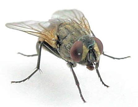 Pinodebate com top 5 para ahuyentar a las molestas moscas con remedios caseros - Ahuyentar moscas exterior ...