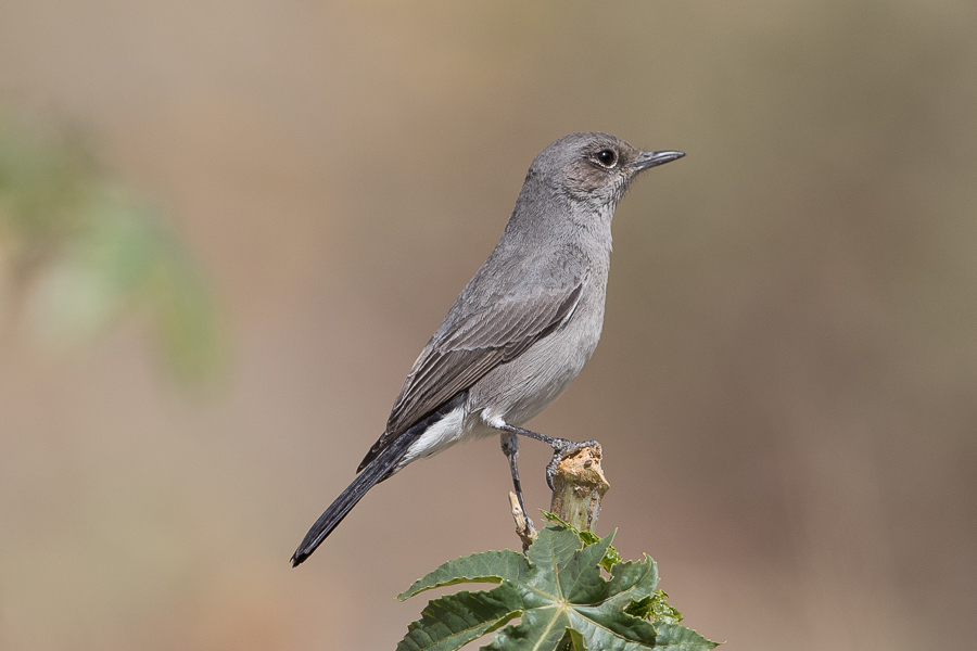 Blackstart – Raydah Escarpment