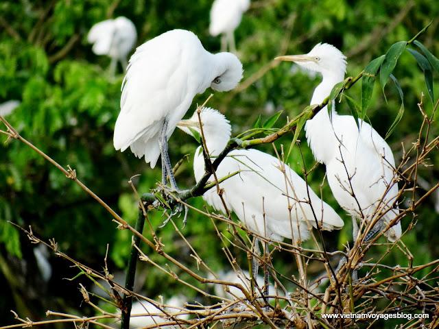 Bang Lang Bird Park, Can Tho