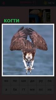 летит птица и вперед вытащила свои острые когти