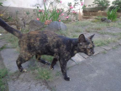 Cara Menjinakkan Kucing Liar, Kampung, Lokal, Persia, Anggora di Rumah