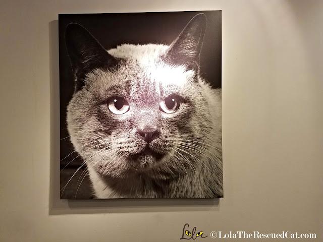 Koneko Cat Cafe|BlogPurr|Merck|CWA