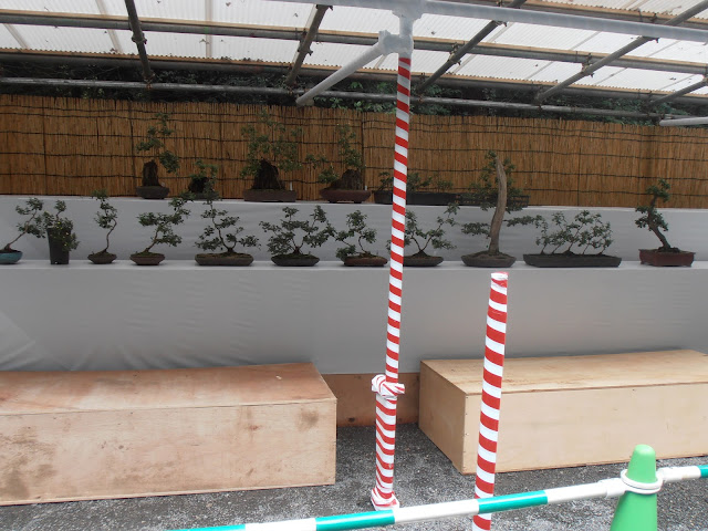 Pequeña exposición del tradicional arte del bonsai en el Parque Yoyogi