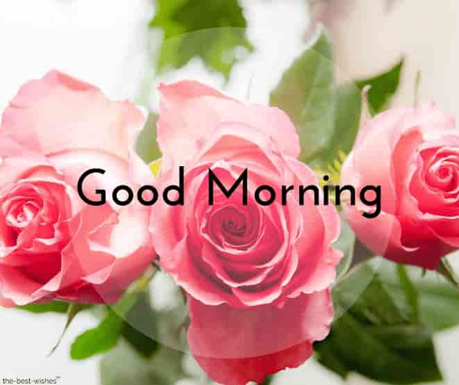 cute good morning with pink roses