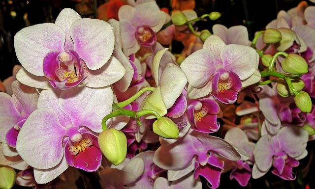 Geny mówią roślinie, kiedy ma kwitnąć