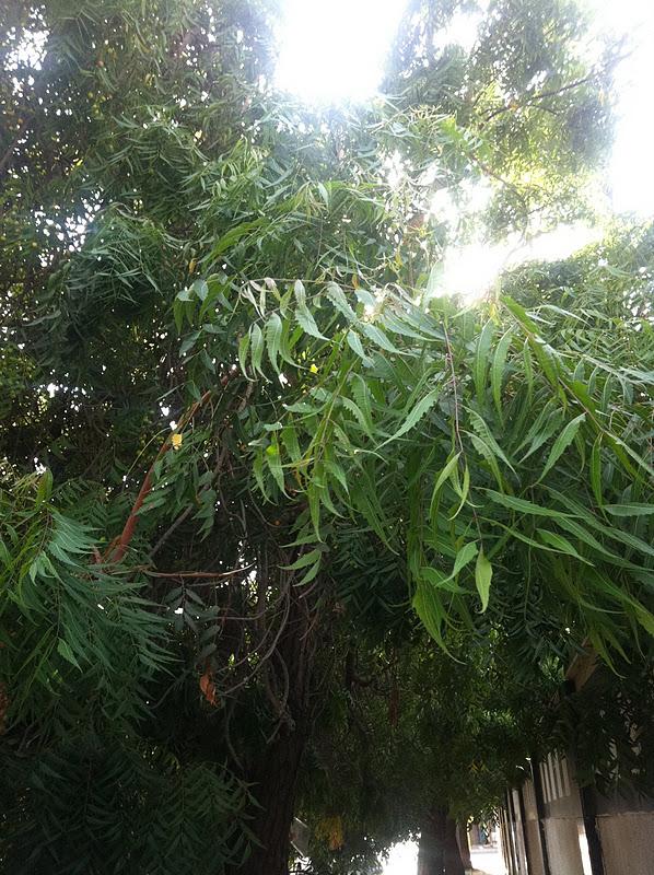 jungle land ksa