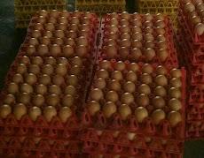Tips menyimpan Telur untuk dikonsumsi