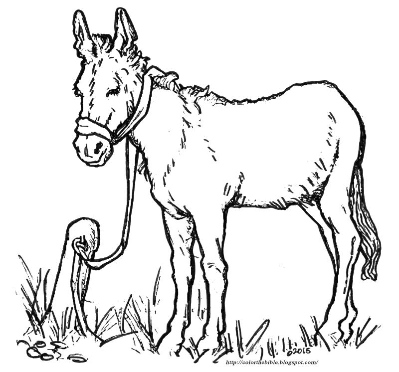 Donkey coloring - photo#43