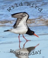 http://paying-ready-attention-gallery.blogspot.com/2014/05/wild-bird-wednesday-98-orange-footed.html
