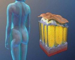 Fitline-CC-cell-plus-capsule-e-tessuto-adiposo