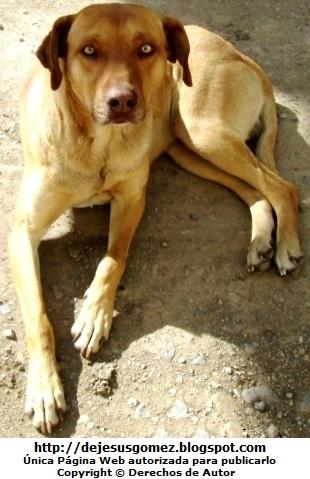 Perro con mirada fija color caramelo. Foto de perro tomada por Jesus Gómez