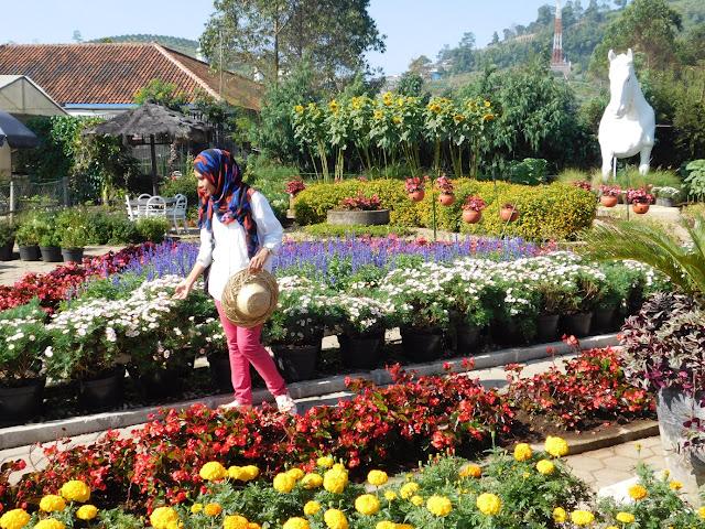 Jenis bunga begonia di Lembang
