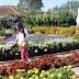 Taman Bunga Begonia yang Penuh Cinta
