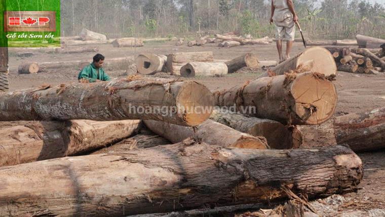 nguyên liệu gỗ Teak nhập khẩu