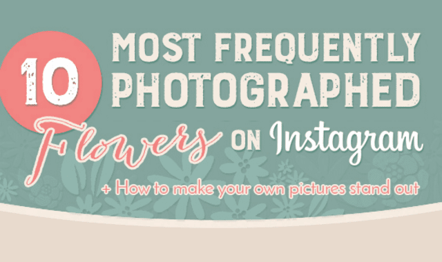 10 Most Frequently Photographed Flowers on Instagram