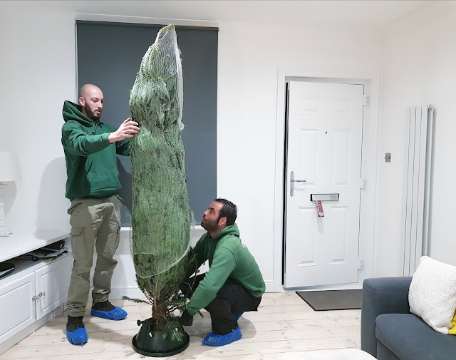 Christmas Tree Delivery in London