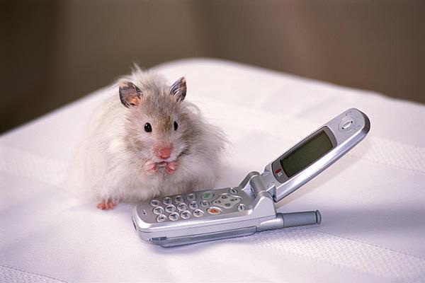 Hamter mobile
