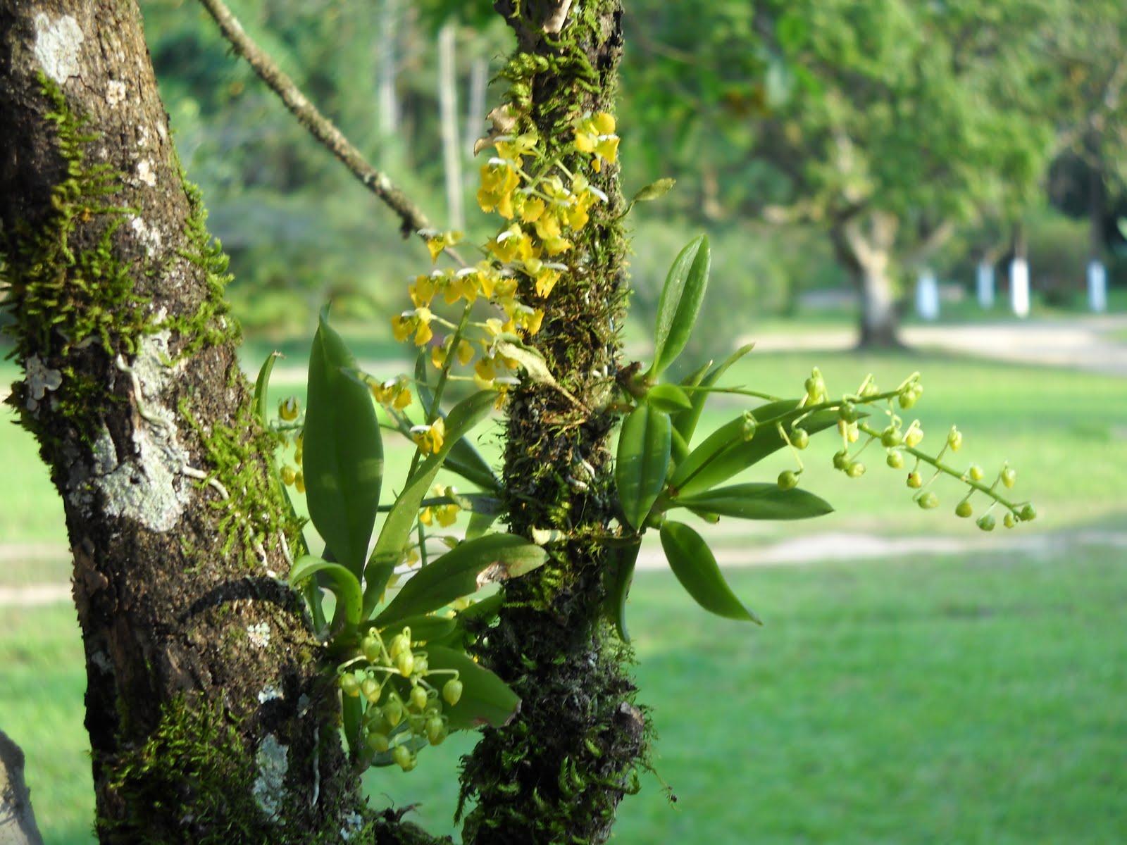 Muito mais verde como come ar com orqu deas for Cuidados orquideas interior