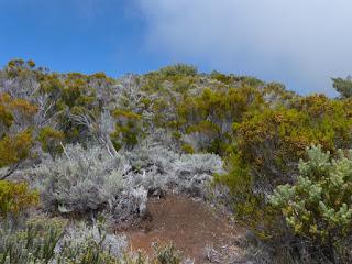 Végétation au sommet du Piton de la Fournaise