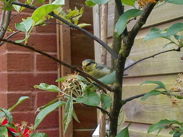 Fledgling Bird in Tree