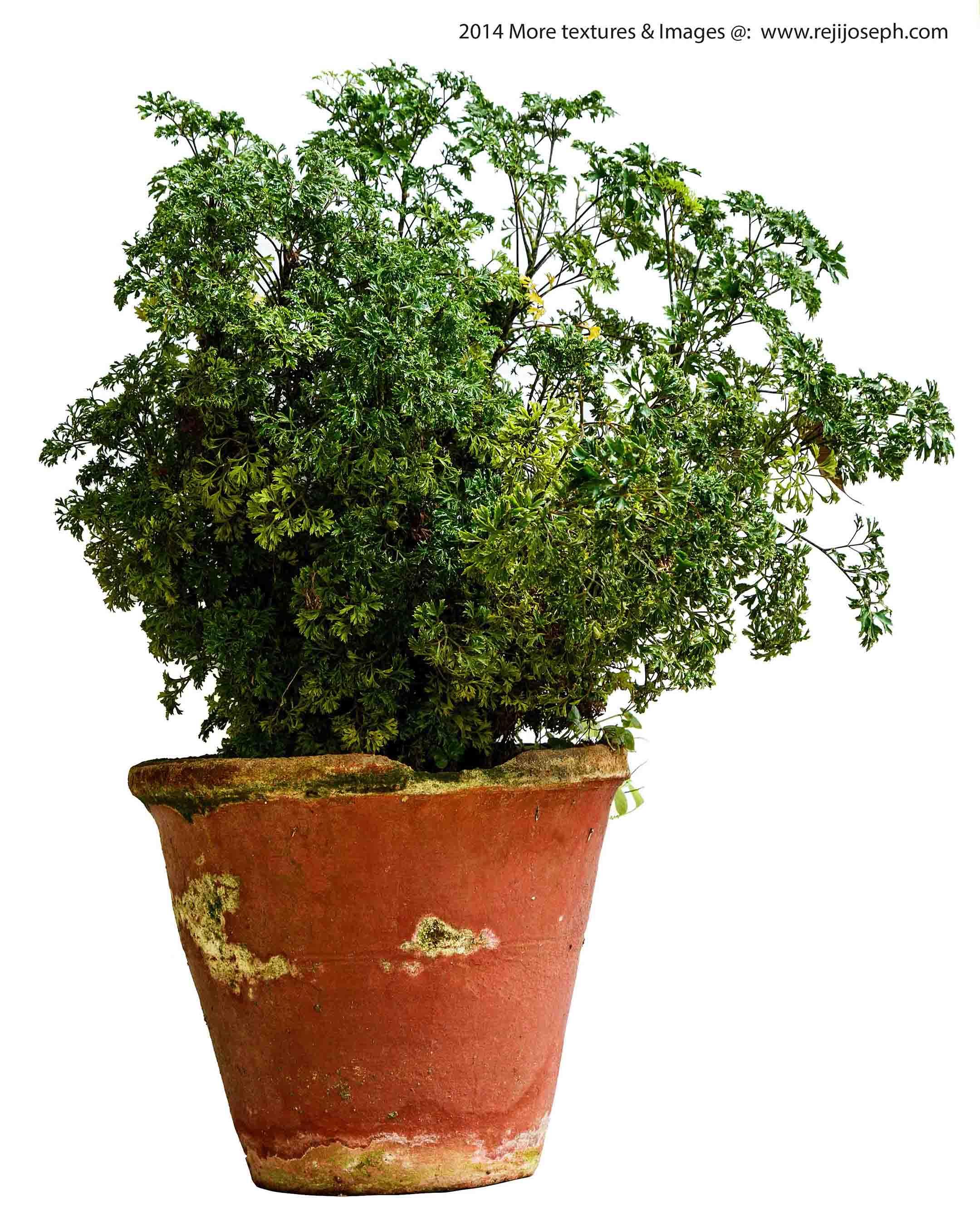 Garden Plant texture 00013
