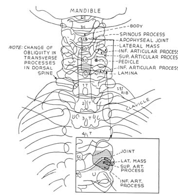 Radiographic positioning: Cervical x-ray
