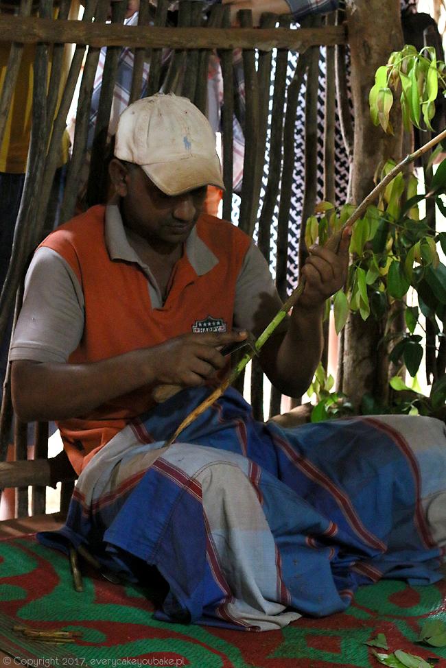 cynamon cejloński - ogrody przypraw na Sri Lance