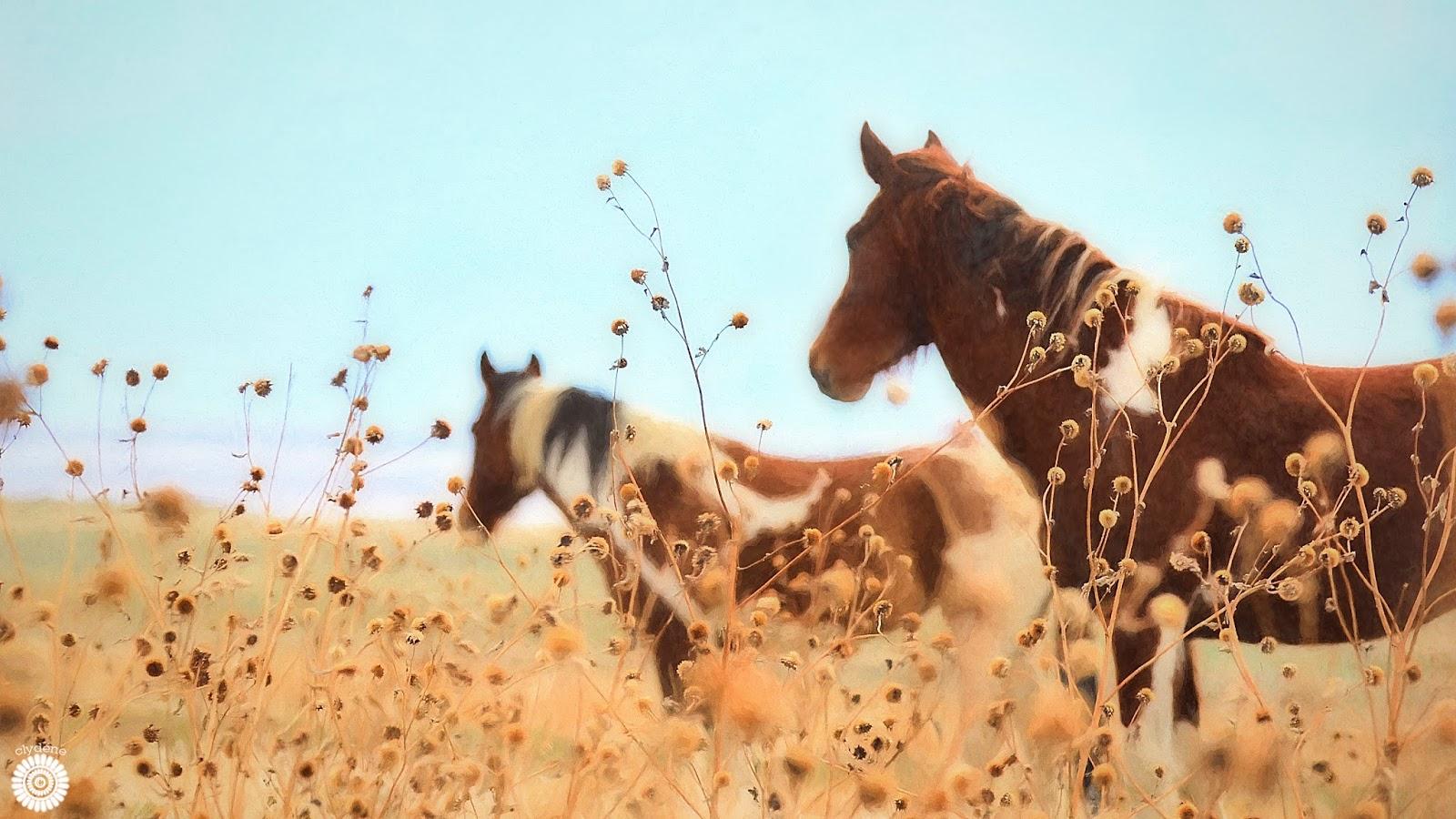 wild horses tooele county