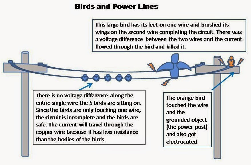Electrical Engineering World: Why birds don't get electrocuted when they sit on high voltage