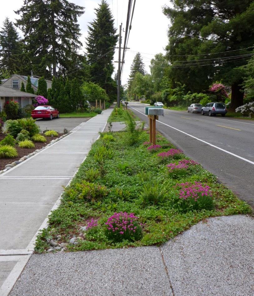 Shoreline Area News Rain Gardens For The Pacific