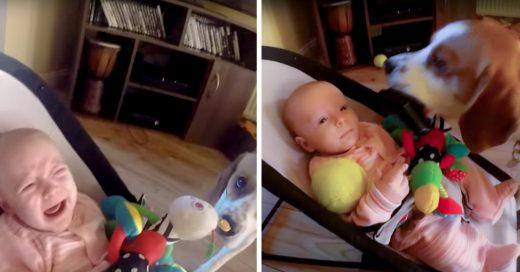 Este perrito hizo llorar a la bebé pero se sintió culpable