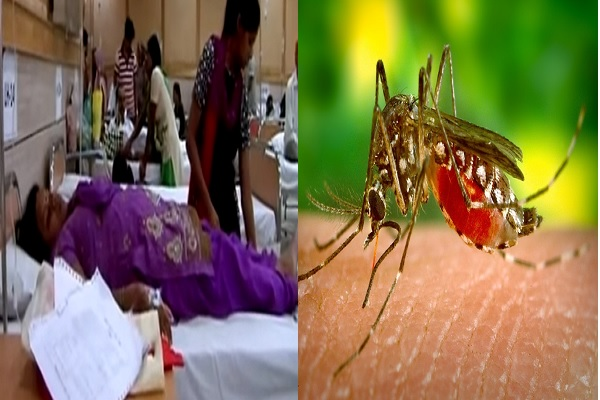 Good News: जिसे एक बार हो जाए उसे जिंदगी में दुबारा नहीं होता डेंगू, चिकनगुनिया