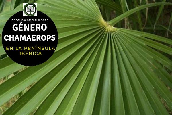 Lista del Género Chamaerops, familia Arecaceae o Palmae en la Península Ibérica