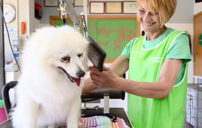 vétérinaires acceptent une assurance pour animaux