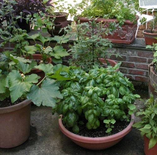 Vegetable Flower Container Gardening Ideas: Wiese Acres: Container Gardens