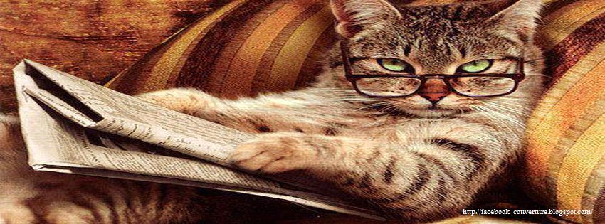 image drole chat facebook