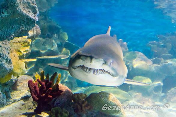 Sea Life akvaryumundaki bir köpek balığı, İstanbul