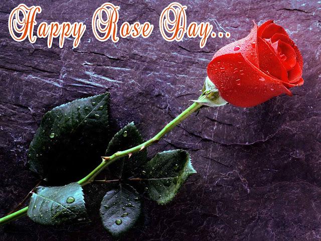 rose day24