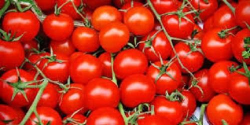 manfaat tomat,manfaat buah tomat,tomat,manfaat tomat untuk diet,manfaat tomat untuk kesehatan,manfaat jus tomat,manfaat buah,manfaat tomat untuk wajah,manfaat tomat untuk rambut,manfaat,manfaat buah tomat dan wortel,manfaat buah tomat tuk ibu hamil,manfaat buah tomat bgi ibu hamil,apa manfaat buah tomat bagi ibu hamil,apa manfaat buah tomat untuk ibu hamil,manfaat buah tomat bagi ibu hamil muda