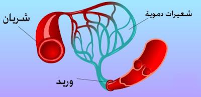 التهابات الأوعية vasculitiden