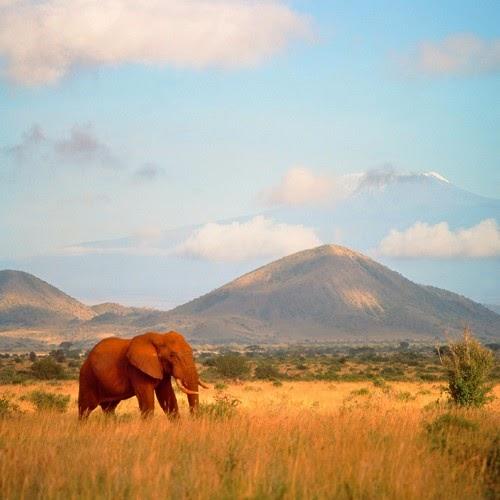 Gajah Afrika