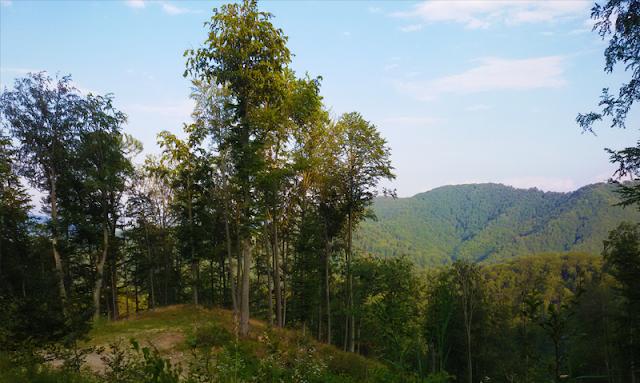 Panorama Poiana Tarsa