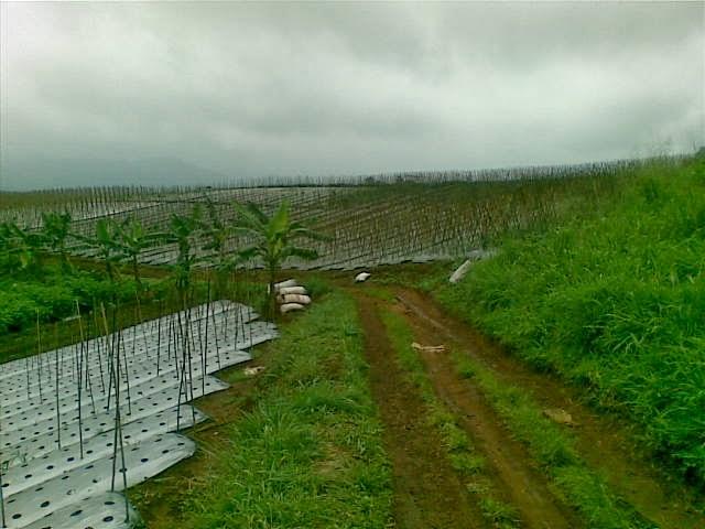Foto(5189) Jual Tanah Milik Luas 12 Ha, Lokasi puncak Jual tanah di cipanas jual tanah di puncak