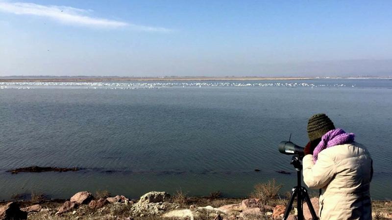 Ταυτόχρονη καταμέτρηση υδροβίων στο ελληνικό και τουρκικό Δέλτα Έβρου