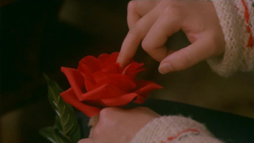 roses qui brulent