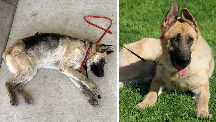 perros abandonados rescatados