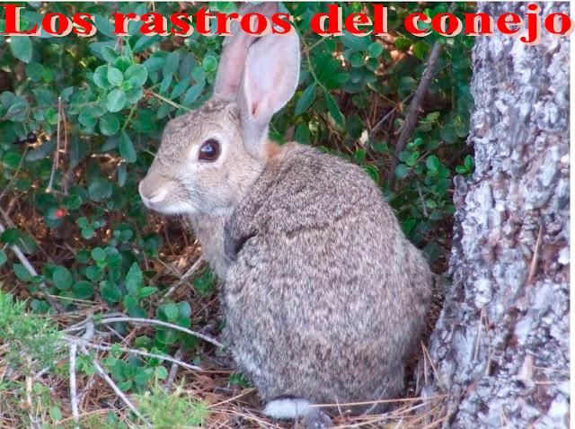 Las marcas del conejo