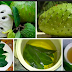 Guyabano Leaves a Natural Solution to Treat Your Diabetes, Cysts, Tumor, Highblood And Many More